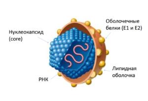 Причины вирусных гепатитов