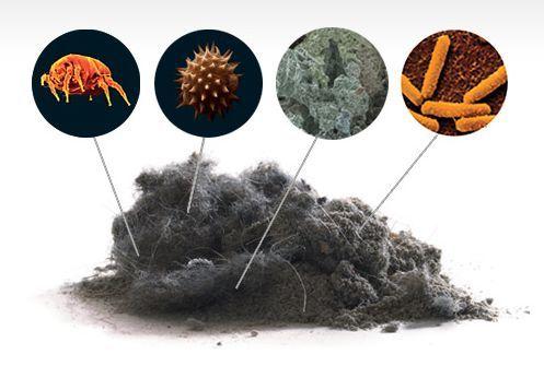 Из чего состоит домашняя пыль