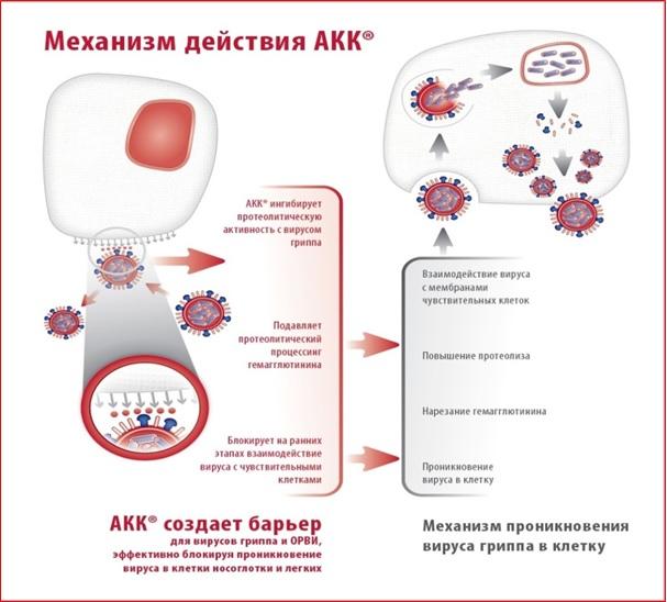Принцип действия АКК