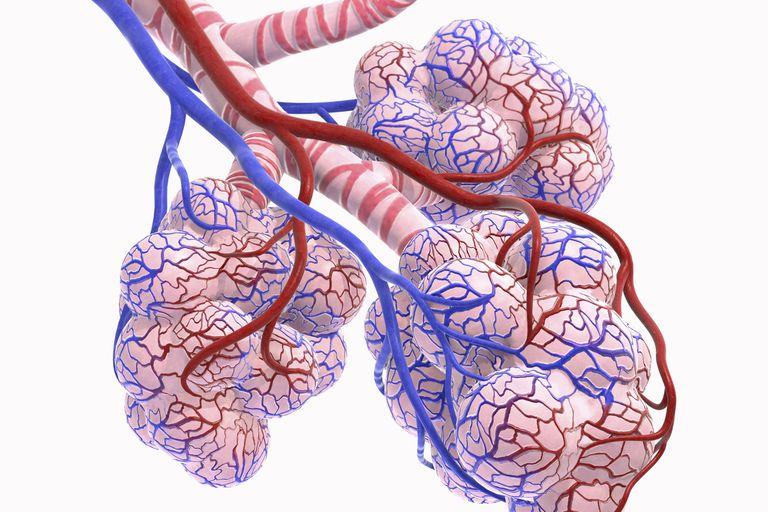 идиопатический фиброзирующий альвеолит - стадии развития
