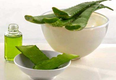 Лечебные свойства каланхоэ при лечении насморка